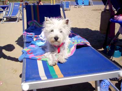 spiaggia per i cani a Bibione