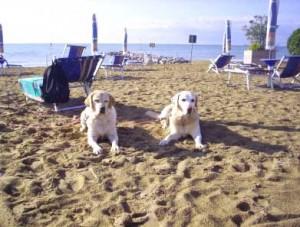 """""""Dog Beach"""" a Bibione"""