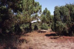 la pineta a Bibione