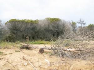 erosione della spiaggia a Bibione